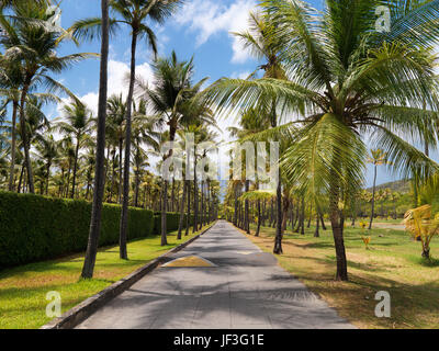 Classic Image of Mustique Road lined with Palm Trees, creating a dappled light - Stock Photo