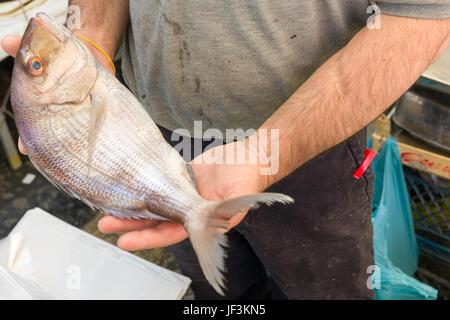 sea bream in fish market - Stock Photo