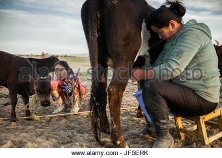 A young girl watches as her mother milks their cow. In the summer, nomad children leave boarding school and urban - Stock Photo