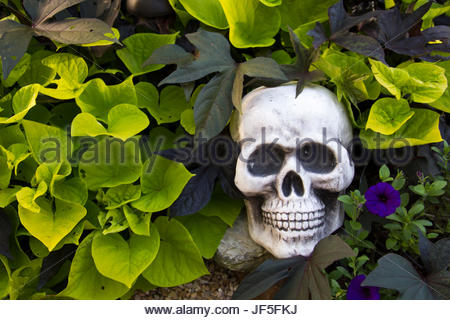 A Halloween garden quietly sprouts a skull Stock Photo: 280546269 ...