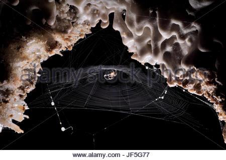A spider on its web deep inside Cueva de Villa Luz in Tabasco, Mexico. - Stock Photo