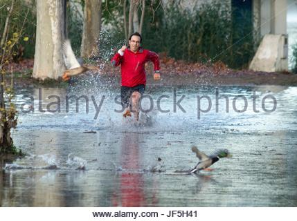 A man running and scaring ducks in Lake Banyoles. - Stock Photo