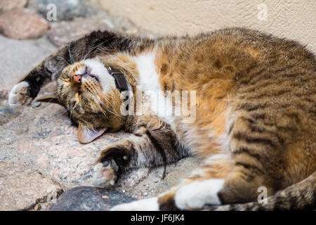 Cat in a bizarre posture sleeping on the stone pavement - Stock Photo