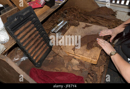 Woman handcrafting a premium cigar from the finest leaves in Ybor City Tampa Florida USA. Circa 2017 - Stock Photo