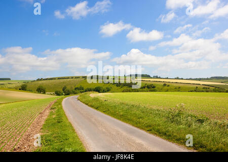 a country road beside pea field on chalky soil with meadows and hedgerows under a blue summer sky in the yorkshire - Stock Photo