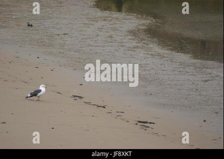 Seagull on Beach, Weston-Super-Mare - Stock Photo