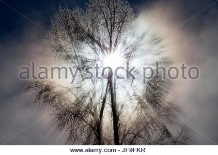 Rays of sunlight streaming through ice-covered tree branches. - Stock Photo