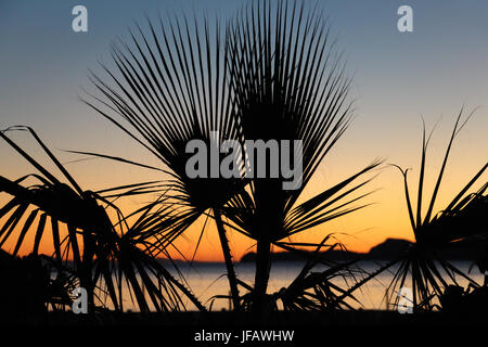Early morning sky over the Sea of Cortez (Gulf of California) as the sun is just about to rise; palm fronds silhouetted - Stock Photo