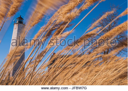 Strong winds blow reeds in front of the File Mile Point Lighthouse. - Stock Photo