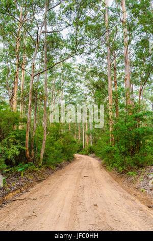 Unsealed dirt road of Boranup Drive through Boranup Karri Forest in the Leeuwin-Naturaliste National Park, Margaret - Stock Photo