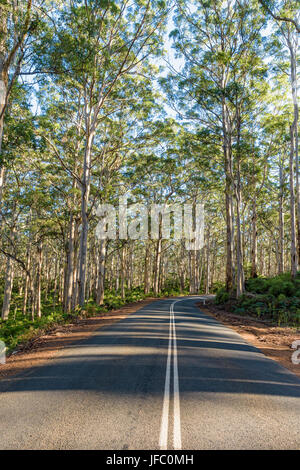Caves Road through the tall trees of the Boranup Karri Forest in the Leeuwin-Naturaliste National Park in the Margaret - Stock Photo