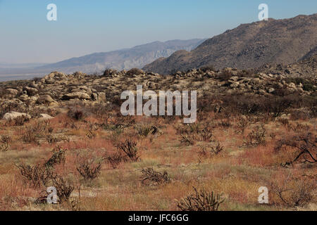 Culp Valley in late spring the Anza-Borrego Desert State Park in California, when the grass turns red, and mountains - Stock Photo