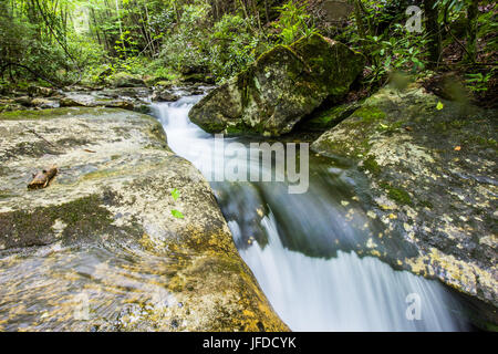 A stream carries clean, clear water through a pristine forest. - Stock Photo