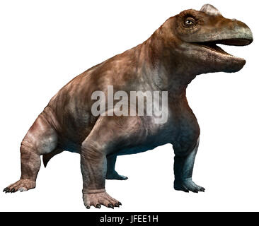 keratocephalus - Stock Photo