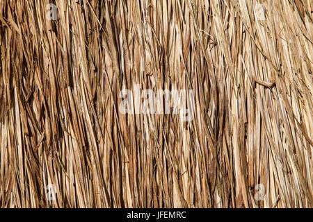 Chile, Araucania, Llaguepulli, Mapuche, Ruka, round house, straw - Stock Photo
