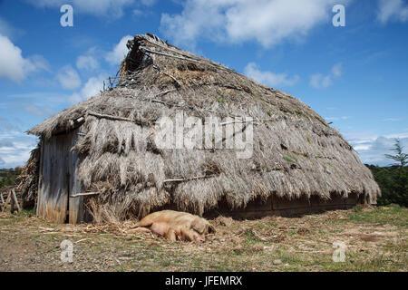 Chile, Araucania, Llaguepulli, Mapuche, Ruka, round house, pig - Stock Photo
