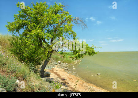 Shore of Lake Sinoe where is standing the ancient ruins of the city of Histria , Romania - Stock Photo