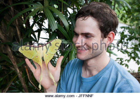 A man holds a luna or moon moth, Actias maenas, in a lowland tropical rainforest - Stock Photo