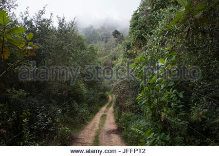 Road through the Zapoten area in Sierra de Bahoruco National Park, an important bird area characterized by moist - Stock Photo