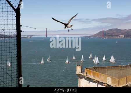 A bird flying over the Alcatraz Federal Penitentiary. A scenic view of the Golden Gate Bridge and sailboats. - Stock Photo