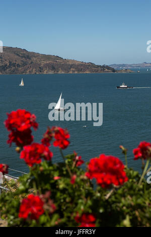 Geranium flowers on Alcatraz Island, and a scenic view of sailboats in San Francisco Bay. - Stock Photo
