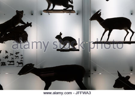 A display of taxidermy animals in silhouette at the Natural History Museum in Taipei. - Stock Photo