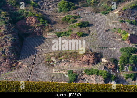 Vineyards on the Mosel river in spring. - Stock Photo