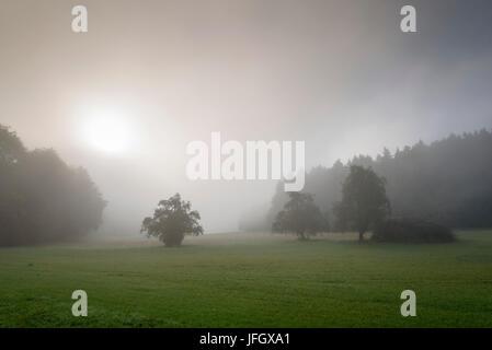 Morning fog on the Höri, Lake of Constance, underlake, Baden-Wurttemberg, Germany - Stock Photo