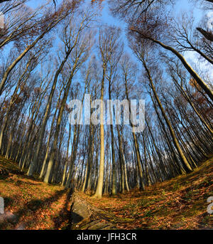 Primeval forest with fallen trees, Austria, Lower Austria, Viennese wood, Mauerbach - Stock Photo