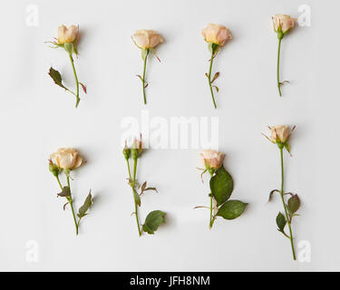Roses isolated on white - Stock Photo