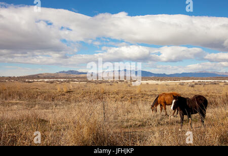 Landscape at the salt lake in Salt Lake City Utah - Stock Photo