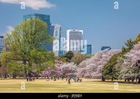 Japan, Tokyo City, Shinjuku district, Shinjuku Gyoen-Park, Cherry Blossoms - Stock Photo