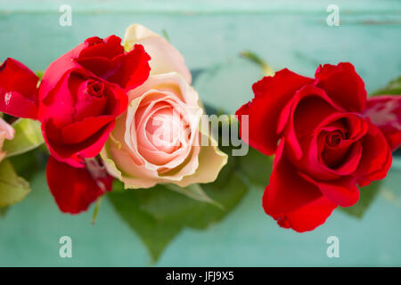 Red roses on a green background, outdoors in the garden - Stock Photo