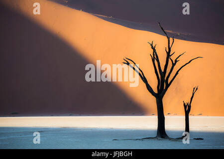 Dead acacia trees in the Deadvlei valley at sunset with red dunes in the background hit by the sunlight, Sossusvlei, - Stock Photo