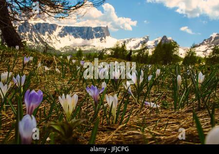Lastoi de Formin, Cortina d'Ampezzo, Dolomiti, Dolomites, Veneto, Italy, Cinque Torri - Stock Photo