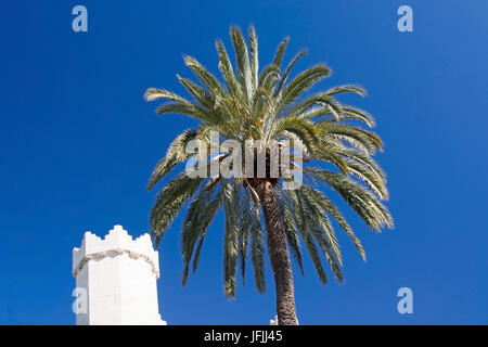 Sa Llotja tower palm and blue sky on a sunny day in Palma, Mallorca, Spain. - Stock Photo