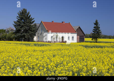 farmhouse in the field of rapeseed - Stock Photo
