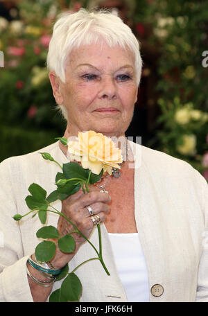 May 22, 2017 - Judi Dench attending Chelsea Flower Show 2017 Press Day, Royal Hospital Chelsea  in London, England, - Stock Photo