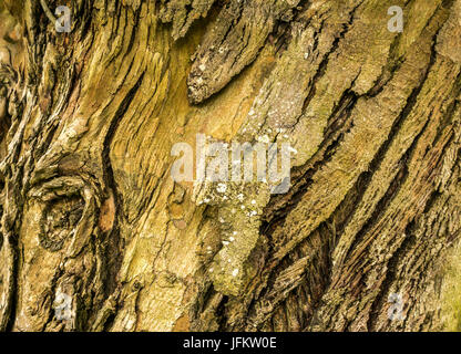 Close up of intricate curvy wood patterns in bark for tree - Stock Photo