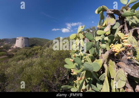 Prickly pears and vegetation of the inland frame the tower Cala Pira Castiadas Cagliari Sardinia Italy Europe - Stock Photo