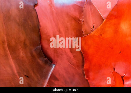 North Africa, Morocco, Fes district, Fez Tannery, Chouara Tannery, Leather processing - Stock Photo