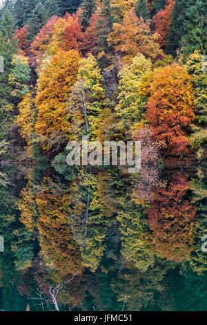 Italy, Trentino Alto Adige, Non valley, reflection of autumn trees Tovel Lake - Stock Photo