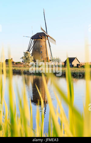 Traditional windmill reflected in the canal framed by grass in spring Kinderdijk Molenwaard South Holland The Netherlands - Stock Photo
