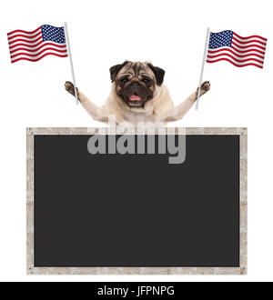 Happy smiling pug puppy dog waving American National flag of USA, with blank blackboard, isolated on white background - Stock Photo