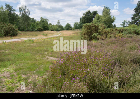View over Mare Hill Common, Surrey, UK on a sunny summer day - Stock Photo