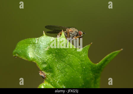 Small fly sits on a green leaf - Stock Photo