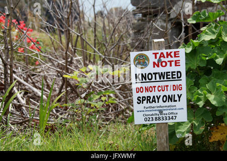 Treated knotweed plants and warning sign in the Republic of Ireland - Stock Photo