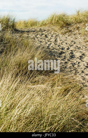 Worn path in the sand over the dune through the beach grass to the Pacific Ocean - Stock Photo