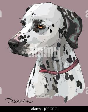 Coloful hand drawing vector portrait of dalmatian dog in profile on pink background - Stock Photo