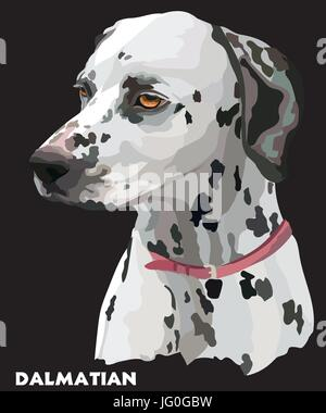 Colored portrait of dalmatian vector Illustration on black background - Stock Photo